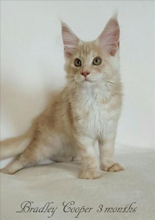 bradley 3 mesi