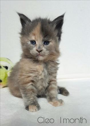 Cleo 1 mese